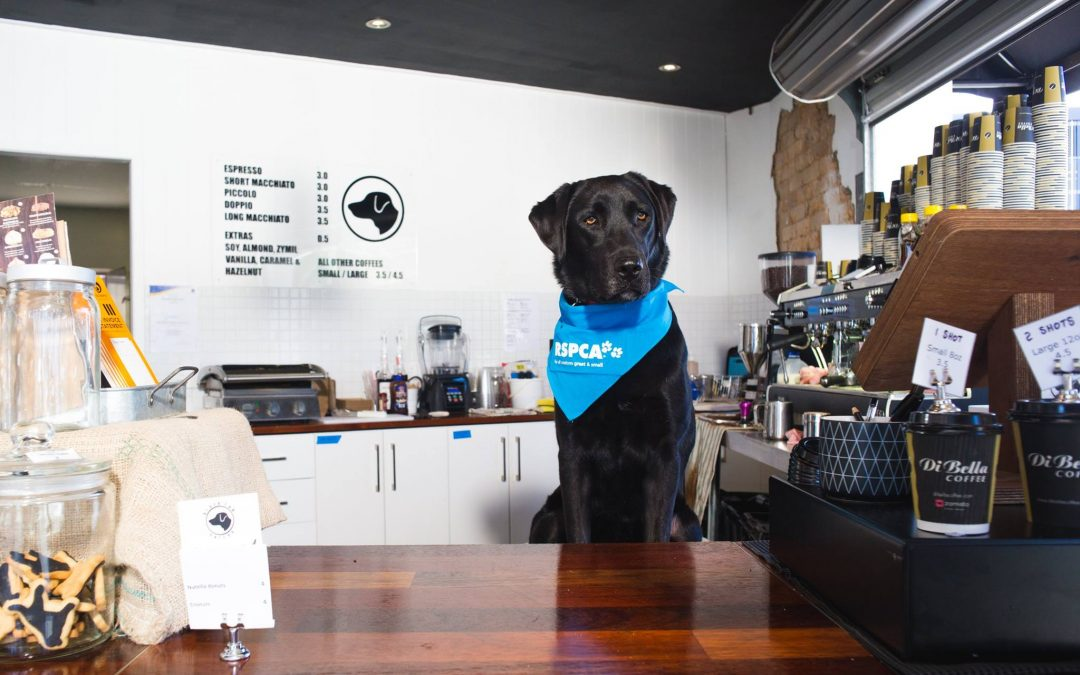 Meet Our Living Showroom Partners: Black Lab Coffee